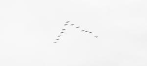 Header: Datenmigrationen als Chance sehen